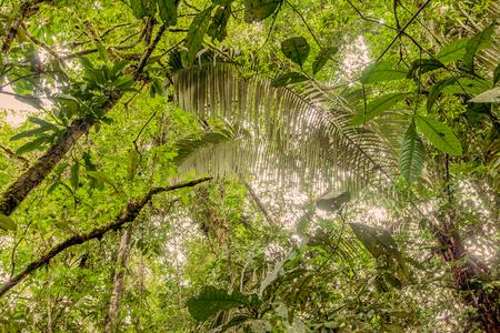 amazonia: Deep In The Ecuadorian Dense Jungle, Amazonia, National Park Cuyabeno, South America