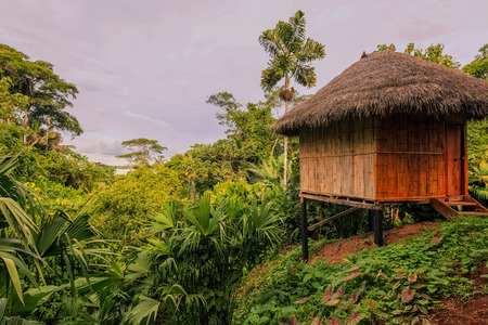 Loge, Amazon Rainforest, National Park Yasuni, South America