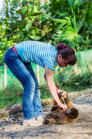 European Woman Playing With An Orphaned Young Monkey, Ecuador, South America  Stock Photo