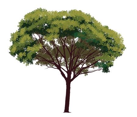 Natural arbre vert sur un fond blanc