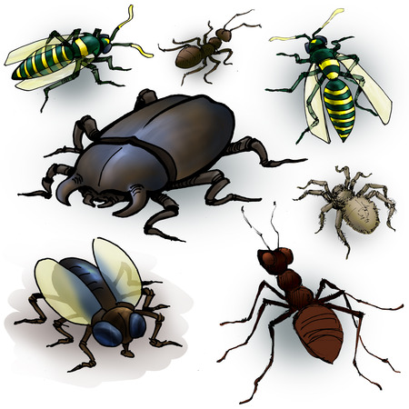 Drawing of a few insects: spider, ant, beetle, fly and wasps