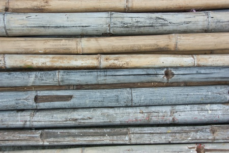 Bamboo has been used a lot of benefits. It features durable, and the weight is readily available worldwide. Variety of species. photo