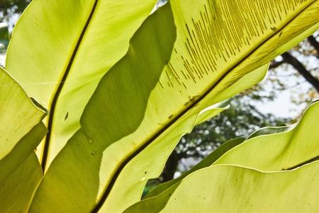 Muchas de las plantas ornamentales se encuentran dispersos. En otras ceremonias, por lo que la gente viene aqu� para admirar la belleza de ella.