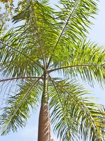 exhaust gases: Trees naturally. Absorb water to moisten well. The exhaust gases by air. The atmosphere is brilliant. Provide shade for shelter. And many additional benefits.