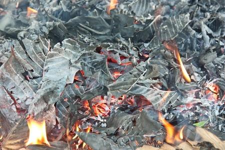 poisoning: La combustione del fuoco. Perch� io so molto poco di esso come la causa di molte vite umane. Al caos stessa causa tempo pure.