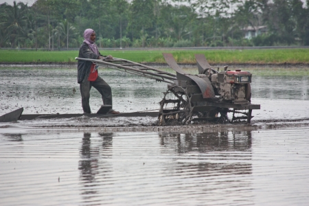 agriculturist: a farmer prepares the ground in growwing plant the agricultural , do transplanting rice seedlings for do something , inject a medicine for kill an insect , a farmer must do the farm through all year in year that have fertile water , this a farmer in Thail