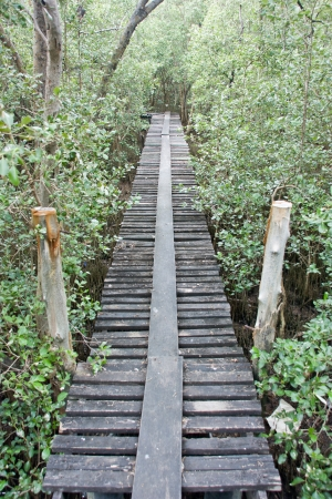 peacefulness: wood bridge , the footpath for study beautiful nature , there is the shady footpath forest comfortably , mind they get close to are close the nature and the beauty that last long