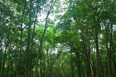 watershed: Natural forest. It is beautiful. Abundance of forests. All kinds of animals live there. Watershed resources. The habitats of animals. Ecosystems purify the air throughout the year