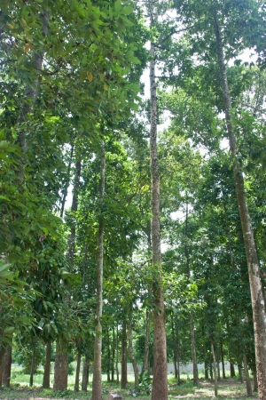 watershed: Natural forest  It is beautiful  Abundance of forests  All kinds of animals live there  Watershed resources  The habitats of animals  Ecosystems purify the air throughout the year