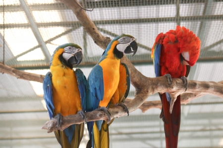 Parrots are wild animals that can be tamed with people. Colorful, very beautiful. Animals fed a commercial for it.