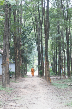 Forestry is a field with a lot of weeds and trees growing in abundance. A source of livelihood of all beings. photo
