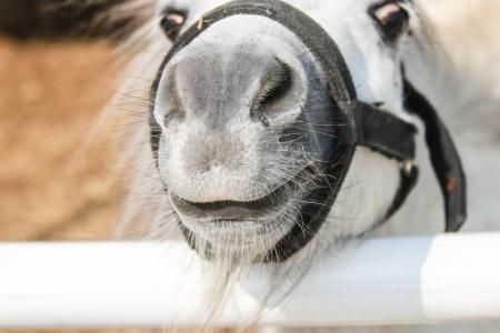 Ganado mam�feros caballo que se ejecuta en un soporte de motor para el pasado humano. Hay muchas variedades y la cultura y la pr�ctica de utilizar todo populares.