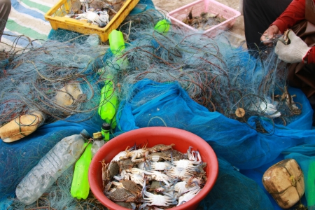 Fishermen are people living on the seashore. Fishery is mainly As primary occupation RMF And to the trade 스톡 콘텐츠