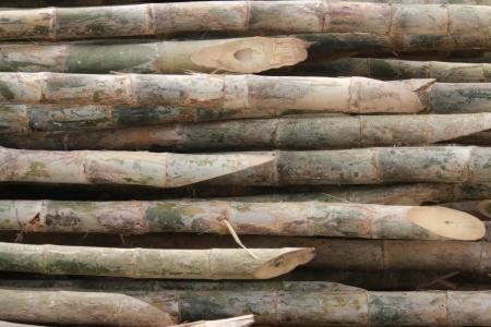 El bamb� es un �rbol Un alto familia de las gram�neas, muy utilizada por muchos. Deja la comida tambi�n convertido para los pandas tambi�n. Foto de archivo