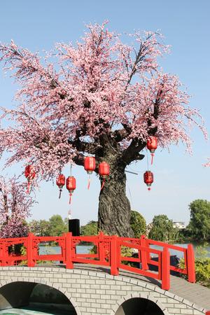 Flores tigre o flores de cerezo Flores en Tailandia temporada de floraci�n natural de la belleza en el Apocalipsis. Como una atracci�n tur�stica Foto de archivo