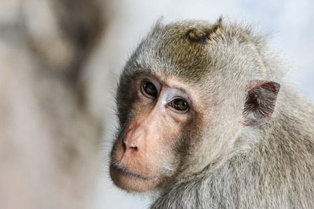 restless: Monkey is mischievous restless beasts like the trees in the forest. A species Animals are mammals Stock Photo
