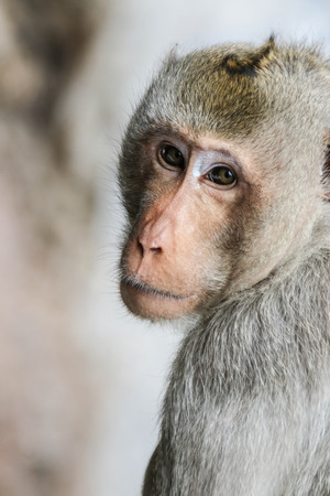 Monkey is mischievous restless beasts like the trees in the forest. A species Animals are mammals Stock Photo