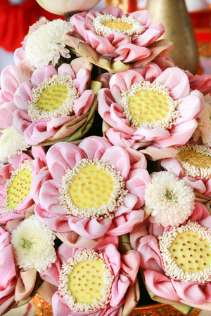 mire: Lotus flower emerged from the mire. But flowers bloom beautifully on the water, there are several types commonly used for worship. And sold as income.