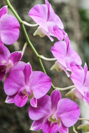 genera: Orchids, or orchids are flowering plants that are the most diverse group, with about 880 genera and about 22,000 species are recognized  probably more than 25,000 species
