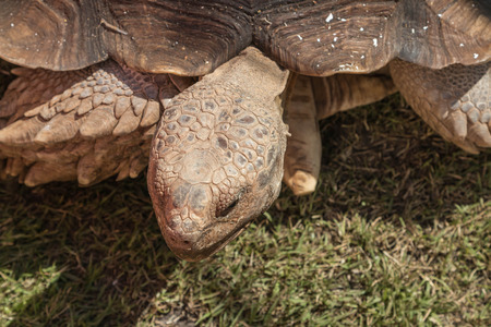 cold blooded: Animals such as turtles are one of the Testudines held in cold-blooded. In reptiles Stock Photo