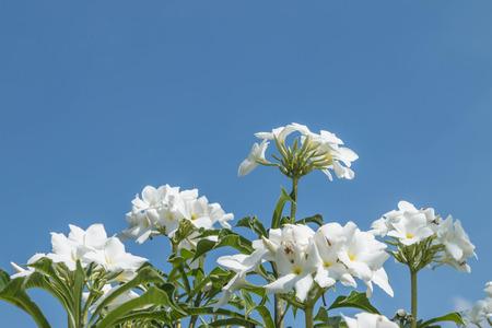 Flores silvestres son flores que se producen de una manera que no se pretend�a plantar. Se encuentra en los bosques naturales Hay flores que florecen en las flores de la estaci�n de invierno y sequ�a floral. Foto de archivo