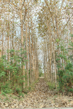 natural resource: Forest resources. The forest is a natural resource that is essential to life. Whether a man or other animals, because timber is both a source of supply of four factors. Stock Photo