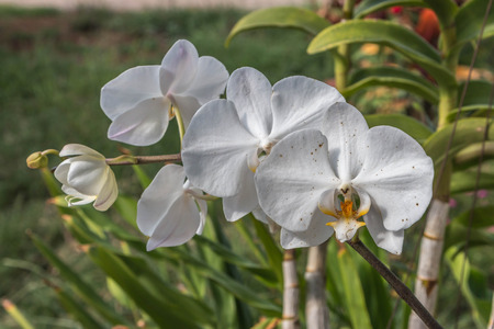 genera: Orchids or orchids are flowering plants that are the most diverse group with about 880 genera and about 22000 species are recognized probably more than 25000 species