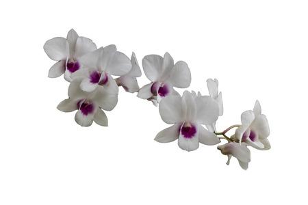plants species: Orchidee, o le orchidee fioriscono piante che sono il gruppo più eterogeneo, con circa 880 generi e circa 22.000 specie sono riconosciute (probabilmente più di 25.000 specie