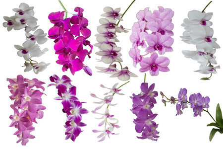 recognized: Orchids, or orchids are flowering plants that are the most diverse group, with about 880 genera and about 22,000 species are recognized (probably more than 25,000 species