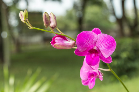 genera: Orchids, or orchids are flowering plants that are the most diverse group, with about 880 genera and about 22,000 species are recognized (probably more than 25,000 species