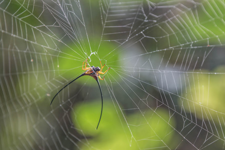 araneae: Spider-Man is a creature that arthropods. Or R. Thomas iPod As well as insects, millipedes, crabs, etc. rated Araneae