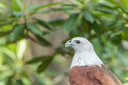 glide: Hawk is similar to the Eagle The birds of prey as well. But the Hawks are smaller than Is there a hooked beak. A sharp claws and strong Flying at a glance Wings spread wide and long Can fly or glide high And have very good eyesight