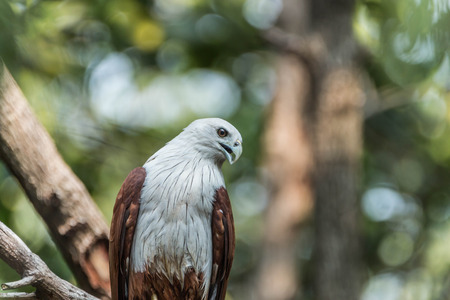 spread eagle: Hawk is similar to the Eagle The birds of prey as well. But the Hawks are smaller than Is there a hooked beak. A sharp claws and strong Flying at a glance Wings spread wide and long Can fly or glide high And have very good eyesight