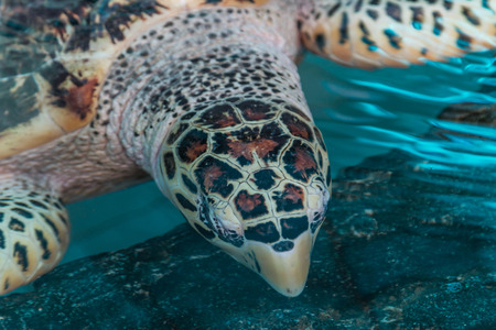 coldblooded: Animals such as turtles are one of the Testudines held in cold-blooded. In reptiles Stock Photo