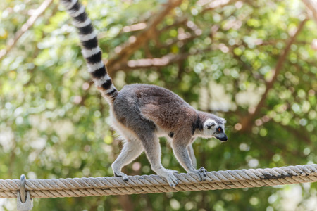 primate: The polymer is the base of the mammal in the primate or monkey.