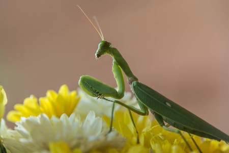 the antennae: Locusts, grasshoppers have short antennae almost a mirror of a shortened. Gu shorter species of locusts that sounds simple. Hide legs caused by rubbing their wings.
