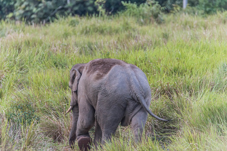 land animals: Elephants are the largest land animals today. Take a pregnancy up to 22 months, which is the longest of the land animals of all kinds. Newborn elephant has an average weight of 120 kg.