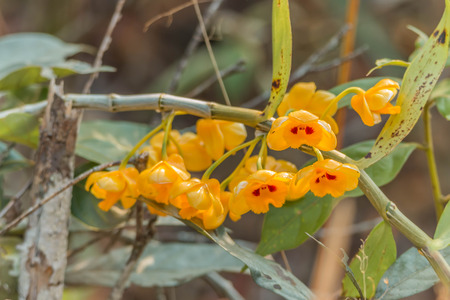flowering plants: Orchids, flowering plants that are the most diverse. Stock Photo