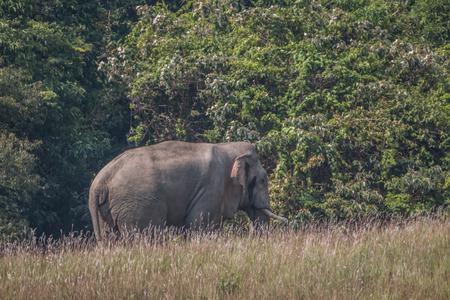 land animals: Elephants are the largest land animals today. Stock Photo