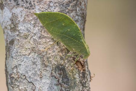 grasshoppers: Locusts, grasshoppers have short antennae.