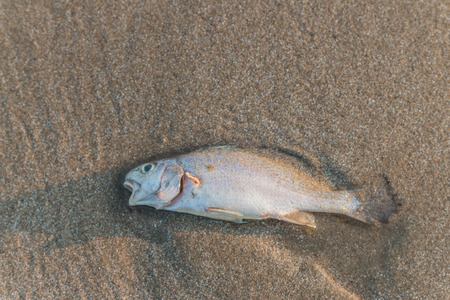 vertebrates: Fish classified in the phylum vertebrates.