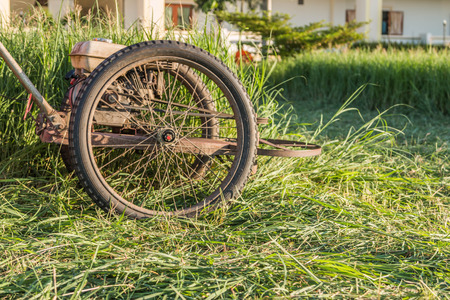 Mowing the lawn, cleaning the park or a place overgrown with grass. To keep the place clean, empty livable and more attractive. Stock Photo
