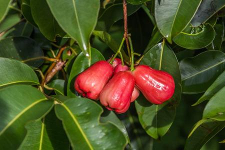 Eigenschaften Der Pflanzentopf, Apfel Ist Mittelgroß Baumkronen Wie ...