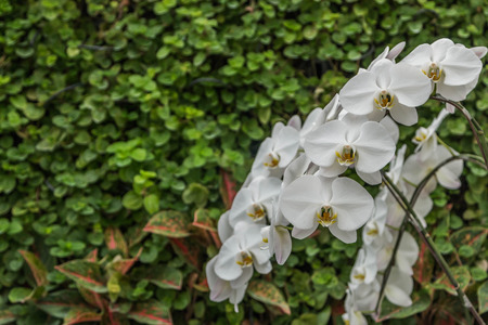 plants species: Orchids, or orchids are flowering plants that are the most diverse group, with about 880 genera and about 22,000 species are recognized (probably more than 25,000 species
