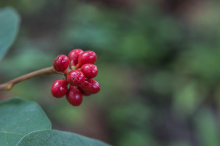 increase fruit: Forest fruit is a fruit that occurs naturally in the wild. Both edible and inedible. A variety of wildlife. Increase the fertility of the forests.