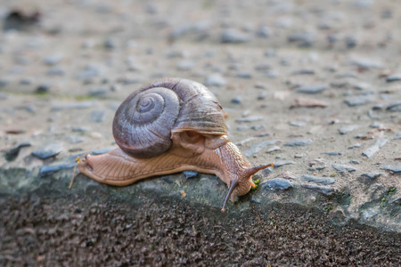 mid morning: Snails are classified invertebrates. The Dallas Morning phylum. The creatures that are born in approximately the mid Carboniferous ferrous.