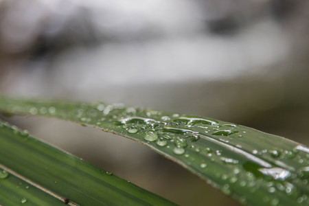 low temperature: Dew caused by water vapor or moisture in the air that combine together into droplets and fall to the ground. Dew is born at night It was at a low temperature of the air at that time.