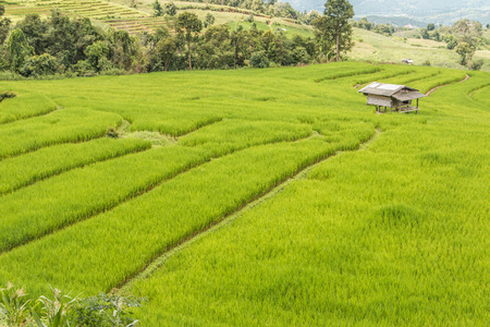 The mean area for planting Rice or rice terraces The plowing the soil soft. High berms and dug around for water into the rice culture of the word field is a broad term.