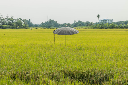 """arando: La media del área para la plantación de arroz o arroz terrazas de la arar el suelo blando. Los altos muros de contención y cavaron alrededor de agua en el cultivo de arroz de la palabra """"campo"""" es un término amplio."""