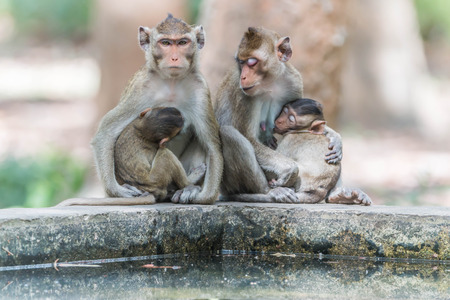 primates: Monkey or ape is the common name of the chordate phylum. Floor mammal Rated apes (Primates) manner similar to humans.